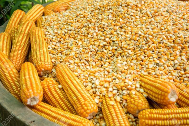 Perú importó maíz amarillo duro por más de US$ 740 millones durante 2020