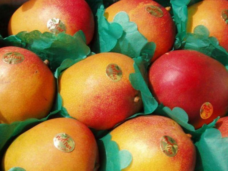 Perú logró exportaciones de mangos por más de US$ 190 millones en el 2017