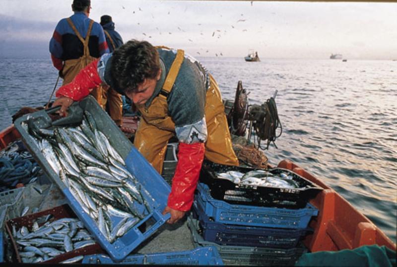 Perú presidirá Comité del Año Internacional de Pesca Artesanal y Acuicultura 2022