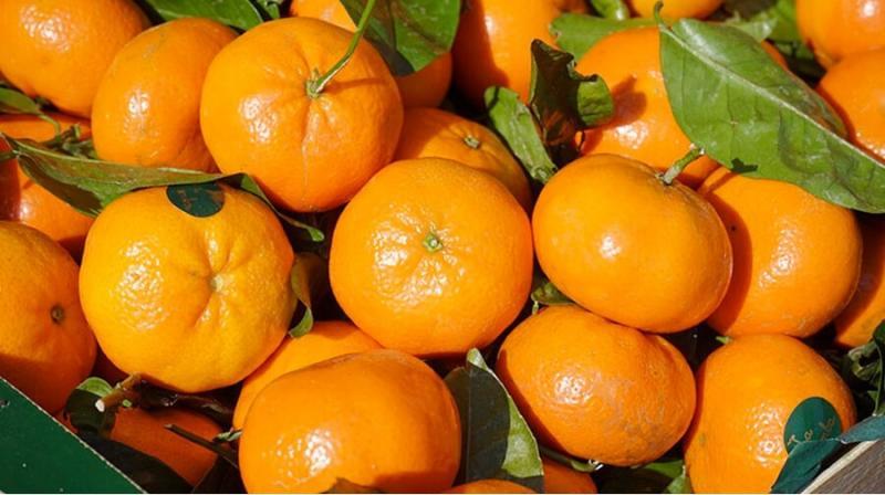Perú se consolidó como el sexto proveedor de mandarinas en el mundo en 2020, participando con el 5% del total