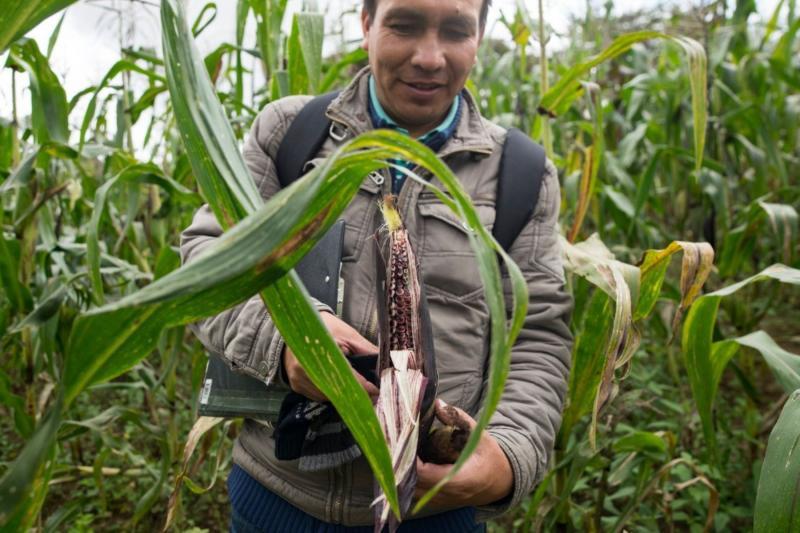Presentan proyecto que promueve mercados digitales en el sector agrario