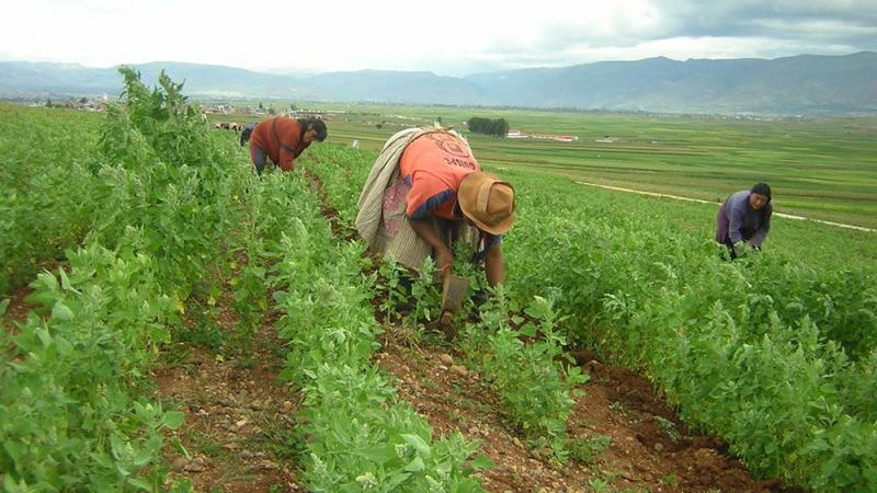 Procompite estableció 309 planes de negocios agropecuarios en 2019