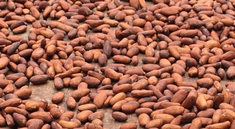 Producción mundial de cacao alcanzaría los 5.1 millones de toneladas en la campaña 2020/2021