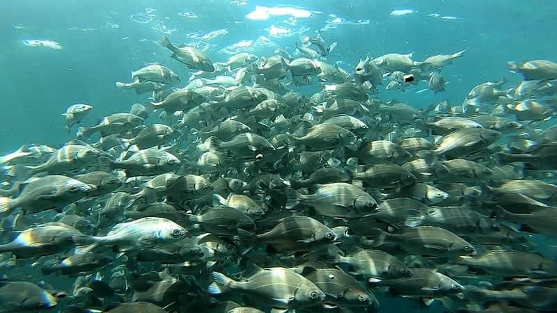 Produce adjudicará 1.000 proyectos de innovación en pesca y acuicultura a nivel nacional
