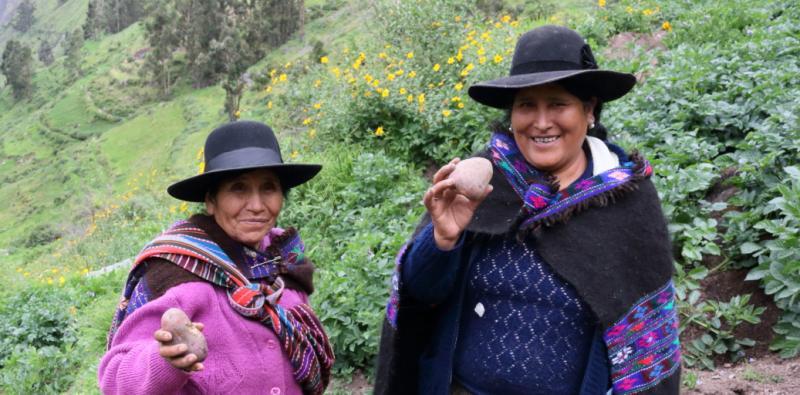 Productores agrícolas del Ande peruano fueron beneficiados con iniciativa promovida por Naciones Unidas y el CIP que favorece la innovación