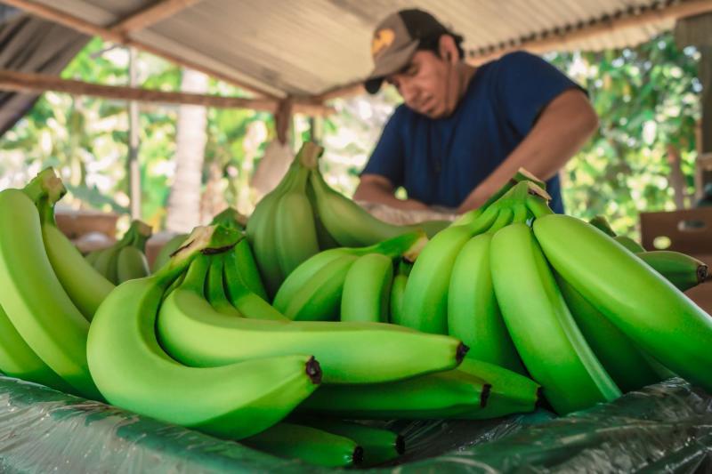 Productores de banano orgánico del Chira amenazan con protestas por falta de agua