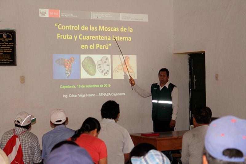 Productores de Cajamarca proyectan exportar palta Hass a Europa