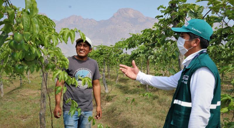Productores de Cajamarca se organizan para erradicar las moscas de la fruta