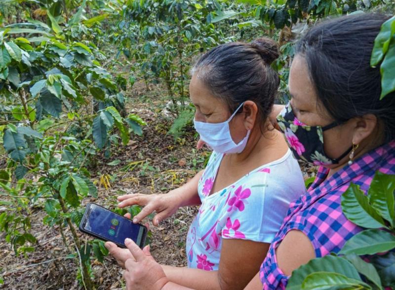 Promueven inclusión financiera de caficultores con aplicativo móvil