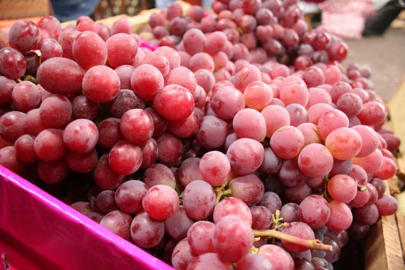 Provid: Exportaciones de uva de mesa crecerían entre 3% y 5% al cierre de la campaña 2019/2020