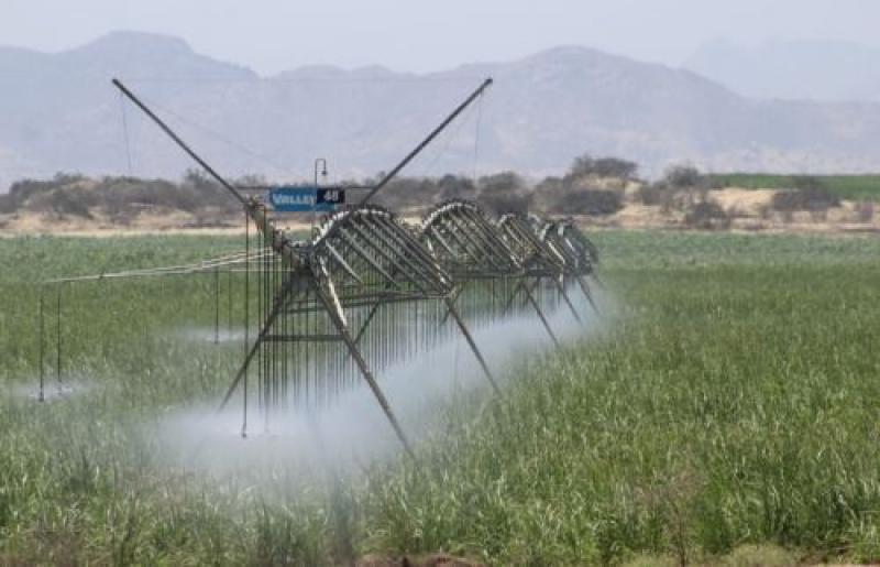 Proyecto Olmos alcanzó 20 mil hectáreas sembradas