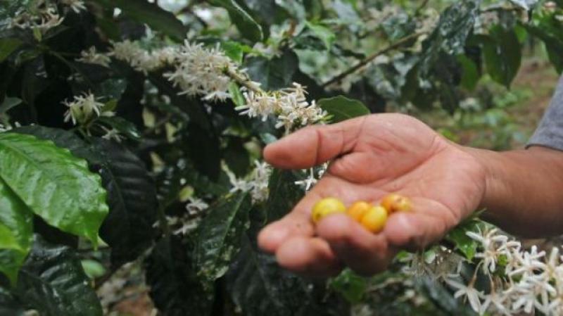 Retoman trabajos para titulación de predios rurales en Perené