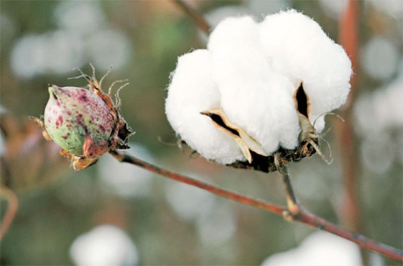 Retos Del Nuevo Consejo Nacional De La Cadena Productiva Del Algodon Textil Y Confecciones Además, cuáles son sus características generales y clasificación. retos del nuevo consejo nacional de la