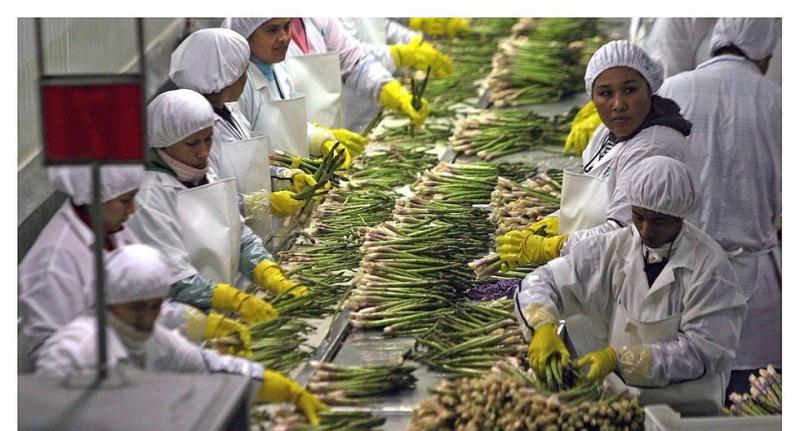 ¿Se redujo la informalidad del sector agrícola en la última década?