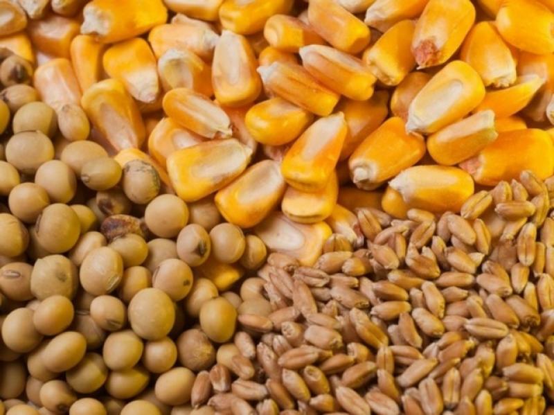 Seaboard Perú comercializará cerca de 1.7 millones de toneladas de granos al cierre de 2019