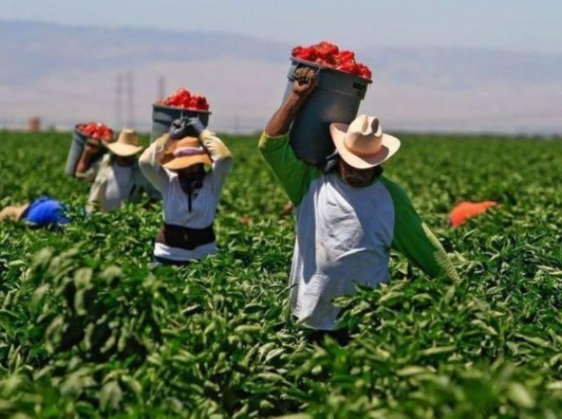 Sector agro generó ingresos tributarios por S/ 475 millones durante enero-septiembre de 2020