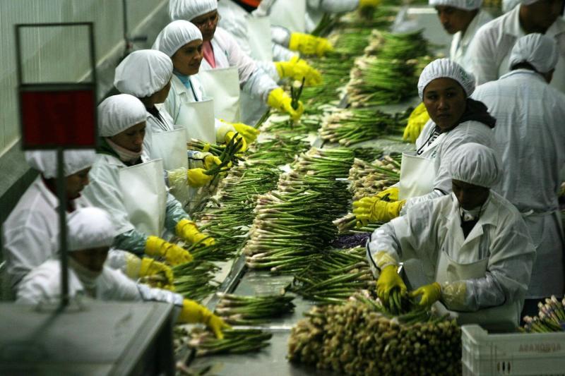 Sector agroindustria generó más de 58.200 empleos formales en 2018