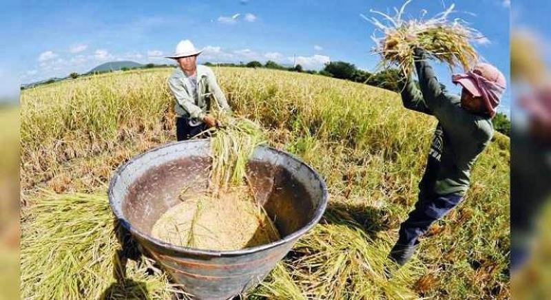 Sector agropecuario creció 1.2% en primer mes del 2021