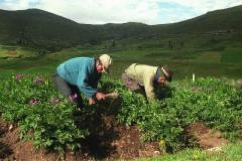 Sector agropecuario creció 4.3% entre enero-abril de este año