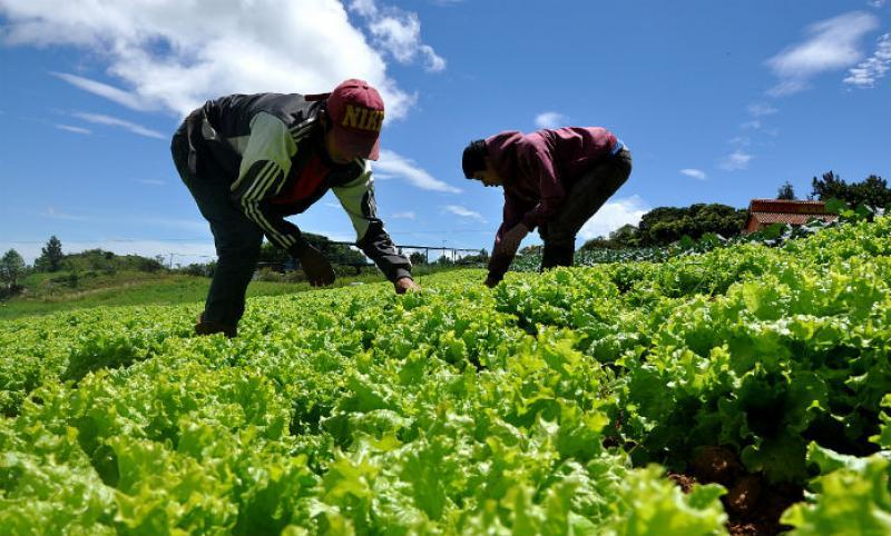 Sector agropecuario se expandió 7.20% en octubre de 2018