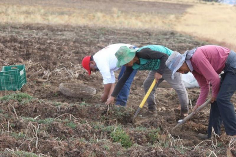 Seguridad Alimentaria y Agricultura Familiar en la Perspectiva de la Pandemia