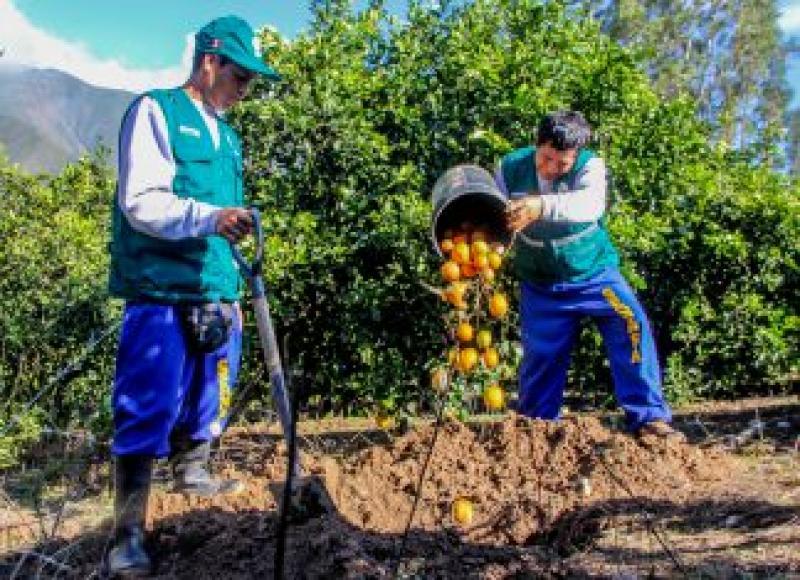 Senasa brinda consejos fitosanitarios a los agricultores