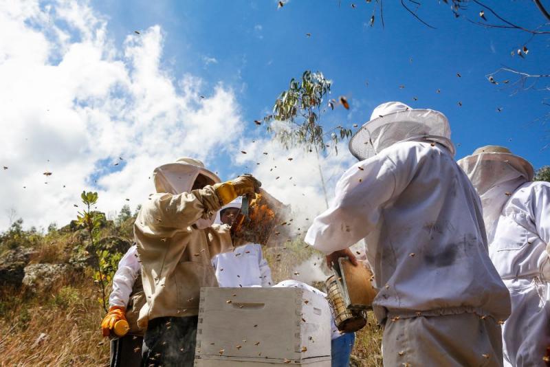 Senasa capacitó a productores apícolas en prevención y control de Varroosis