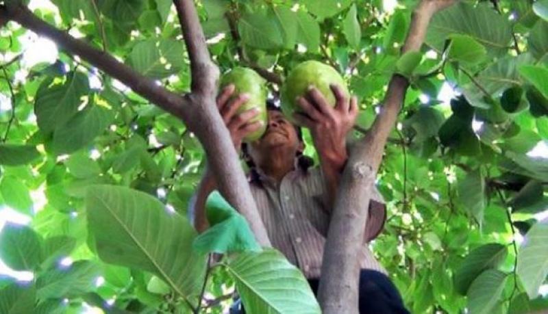 Senasa invertirá S/ 150 millones para promover buenas prácticas agrícolas