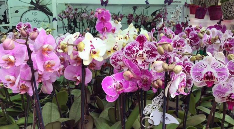 Serfor aprueba el Plan Nacional de Conservación de Orquídeas
