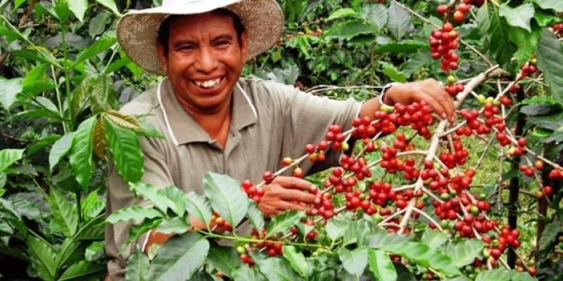Serfor, empresas privadas y ONG realizarán proyecto agroforestal con café
