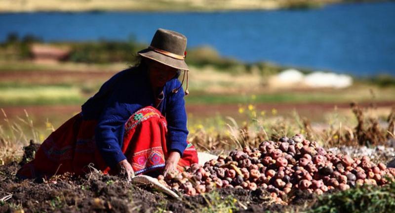 Solo el 21% de la superficie agrícola del país está en posesión de las mujeres