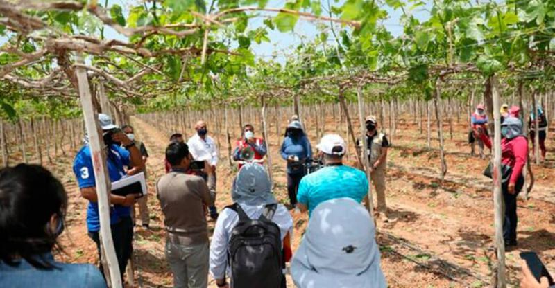 Sufanil presentó programa 'Chackra Runa Perú' para capacitar a trabajadores agrarios