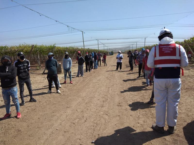 Sunafil exige a agroexportadora formalizar a 140 trabajadores que fueron obligados a esconderse durante intervención