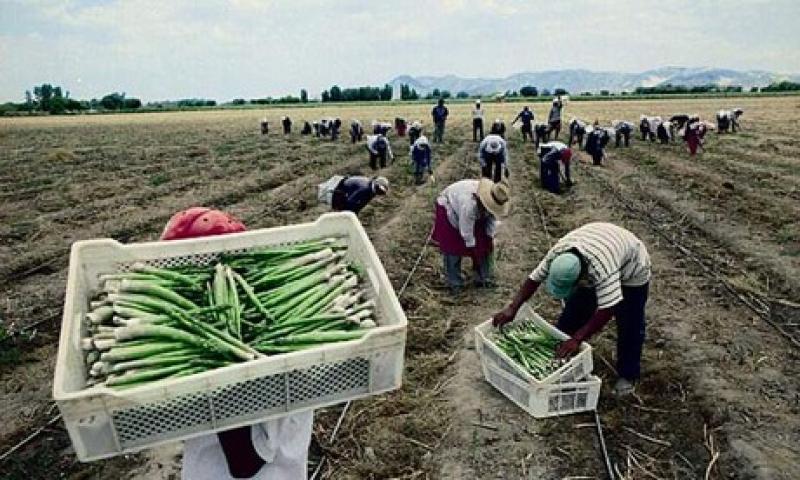 TLC entre Perú y Australia potenciará la exportación de espárragos y quinua de nuestro país