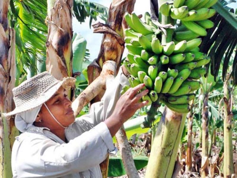 UN TERCIO DE LA POBLACIÓN QUE TRABAJA EN AGRICULTURA SON MUJERES