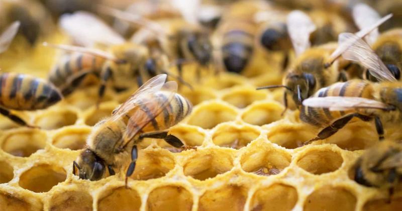Utilizan blockchain para producir miel y garantizar su autenticidad
