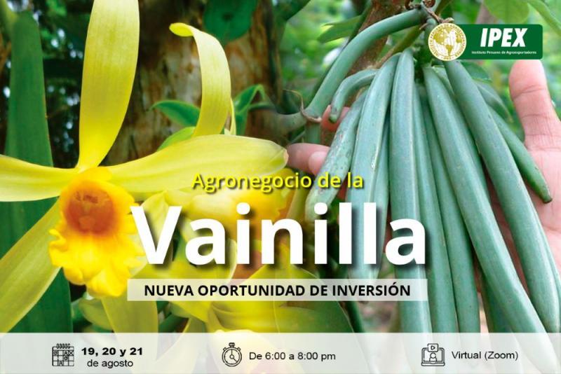 Vainilla: un agronegocio interesante de inversión