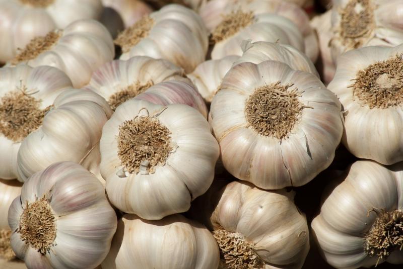 Venta al exterior de ajos frescos llega a US$ 4.5 millones
