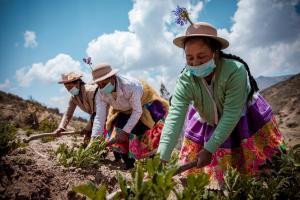 11.165 productores agropecuarios accedieron a Planes de Negocio y Proyectos de Reconversión Productiva de Agroideas