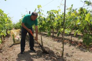 13.500 familias promueven agricultura orgánica con uso de guano de las islas