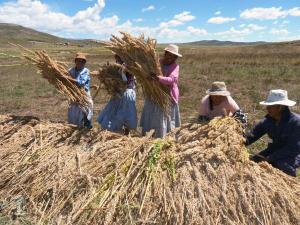 20 países confirman su presencia en próximo Congreso Mundial de la Quinua  en Puno