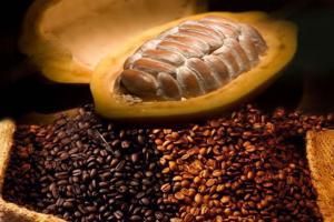 22 Convención Nacional del Café y Cacao abordará amplia agenda de actualidad para ambos cultivos