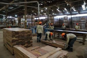284 empresas forestales ya están listas para reiniciar sus actividades