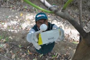 5.312 agricultores se beneficiarán con Proyecto de Erradicación de Mosca de la Fruta