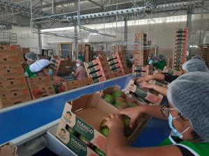 6.458 empresas exportaron entre enero y julio de este año