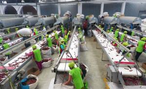 70 empresas peruanas en la lista roja de la FDA: están impedidas de ingresar a EE.UU.