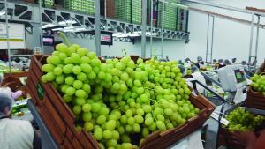 ADEX: Agroexportaciones no tradicionales de Perú a México crecieron en valor 11.6% de enero a noviembre del 2020