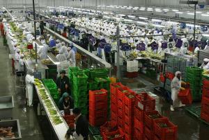 ADEX: Al 2021 agroexportaciones con valor agregado generarían más 1.5 millones de empleos entre directos, indirectos e inducidos
