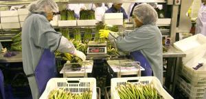 AGAP: derogar la Ley de Promoción Agraria sin alternativa de mejora pondría en riesgo el desarrollo de los últimos 20 años