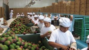 AGAP exhorta al presidente de la República y del Congreso a que prioricen la continuidad de la Ley de Promoción Agraria